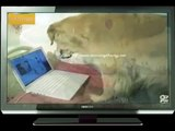 Funny dog videos   Funny dog videos try not to laugh   Dog video