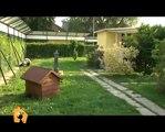 """""""Cani, gatti & c."""" - Gatti in adozione nella puntata del 30 Maggio 2012"""