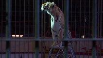 Mexique: les cirques ne peuvent plus exhiber d'animaux
