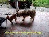 Cat Dog Crossbreed | Chaleurs Chien et Chat en Saillie