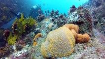 Diving Seal Rocks
