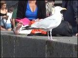 Le Goéland oiseau de mer