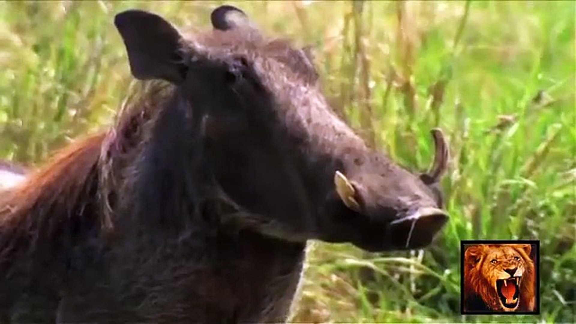 National Geographic Documentary Wild Animals attack National Geographic Animals ✔ ► P.5