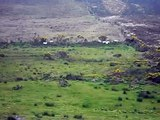 Sheep Herding in Ireland
