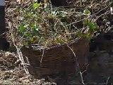 Abeceda vrtlarstva - Lijepe i korisne