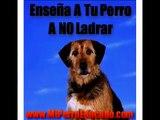 Educa A Tu Perro A No Ladrar.mov