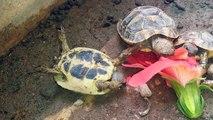 Tortoise Priorities