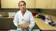How to Switch a Small Kitten From Canned Food to Dry Food : Kittens & Cat Care
