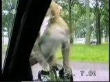 Funny Animal Clips Collection- Everytime We Touch