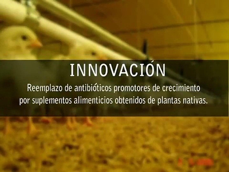 PLANTAS MEDICINALES COMO ALTERNATIVA AL USO DE ANTIBIOTICOS EN INDUSTRIA AVICOLA