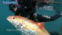 Géant sériole chasse sous-marine Vidéo de oneFish Going East - Aventures sous-marines ITZTV