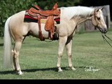 Seek Gold / Kutie Performance Horses/ Offered For Sale