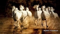 The West, Redefined: White Horses of the Camargue Photography Workshop
