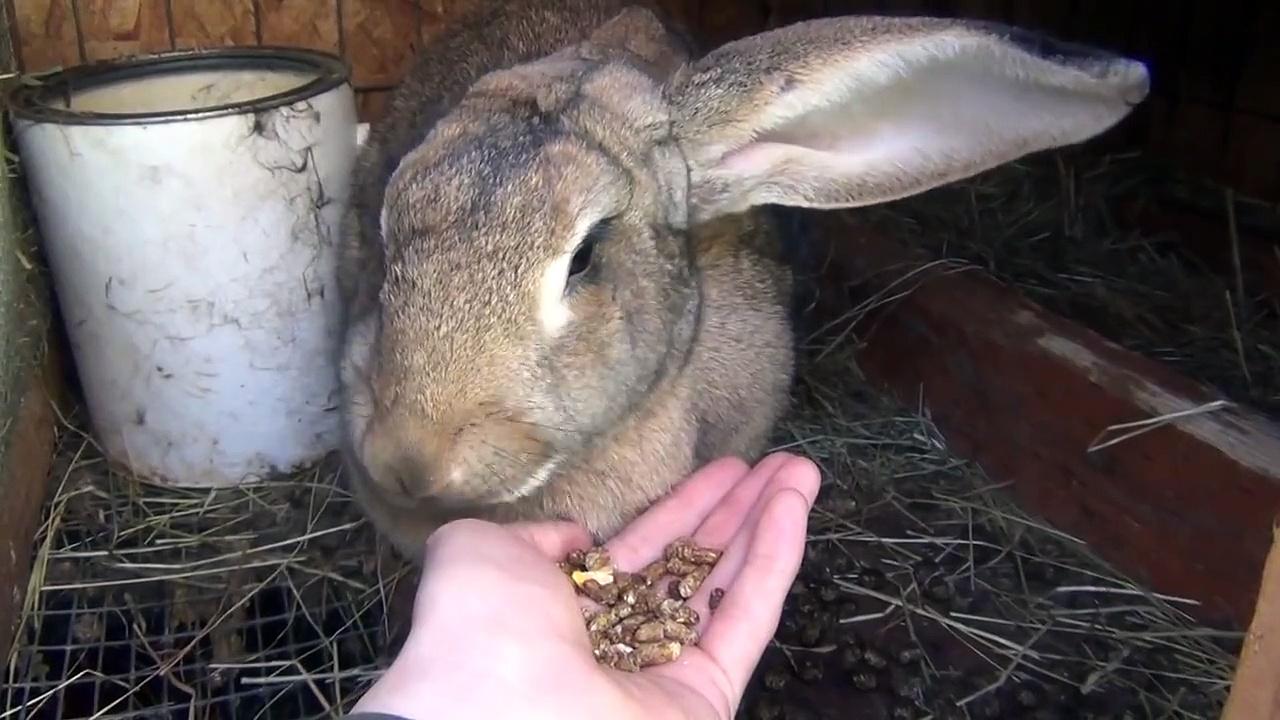 Rabbit eating, hand feeding rabbits