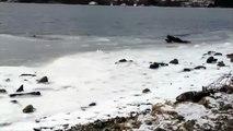 Un homme sauve un chien pris au piège dans l'eau glacée