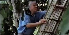 David Attenborough finds love