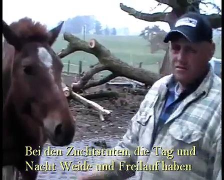 Freiberger als Cowboy-Pferde