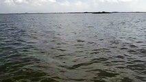 Dolphin Sighting While Kayak Fishing