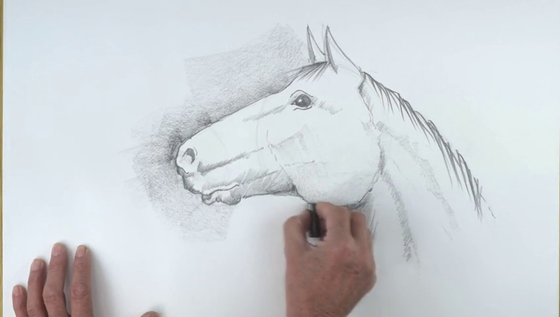 How To Draw A Horse S Head Video Dailymotion