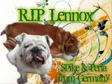 R.I.P. Lennox - you will always be in our hearts and memories