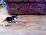 Petit chaton effrayé par deux lézards