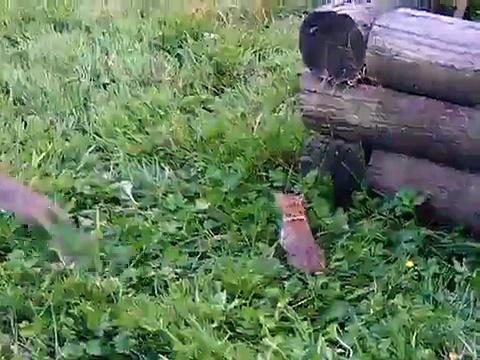 A rabbits life