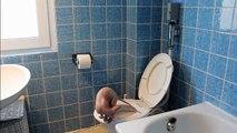 Katze geht aufs Klo. Automatische WC-Spülung selber bauen. Cat using toilet.
