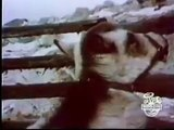 Classic Seseme Street - Wild Pony Ride