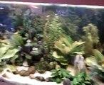 Mon aquarium de 240 litres