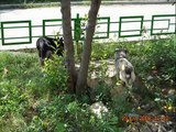 Behavioral Patterns in Dogs: Stray dogs II