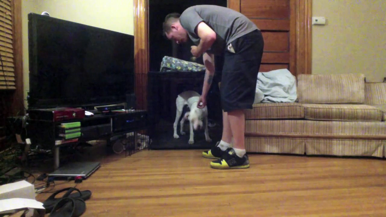 """Clicker Training a Deaf Dog – """"Crate Training"""" – White Boxer Puppy"""