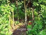 Полезные советы, Дача, сад, огород,