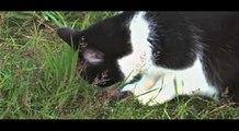 Honey Badger Narrates: WHEN ANIMALS EAT 2!!! (WARNING: BOTH CUTE & NASTYASS)
