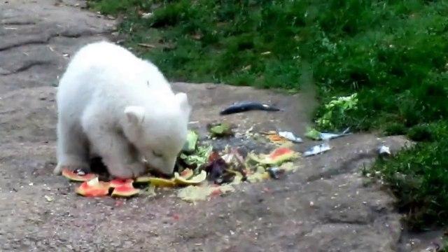 Eisbärenbabys Nela und Nobby - Morning Has Broken