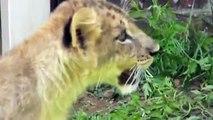 Baby Deers & Baby Lions & Two Elephants dance