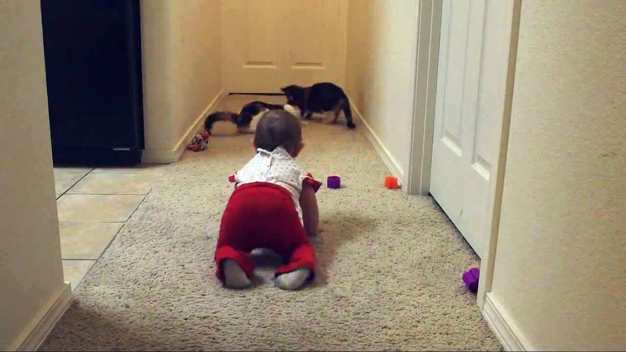 Laser Pointer + Cats + Baby = Hilarious