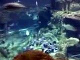 fish aquarium 1 sa atoll reef