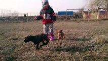 Isis(pitbull/amstaff halfbreed 2 yrs & 6 mo), her puppies(mix pitbull/amstaff) 7 weeks