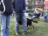 Julie Blanding training her dog, Fred, at a Michael Ellis Seminar in Boston