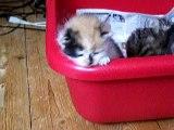 Jeux de chatons