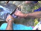 Lajos Kovács-Catfish 83kg 237cm 2003 Hungary, Tisza river @ Tiszakécske