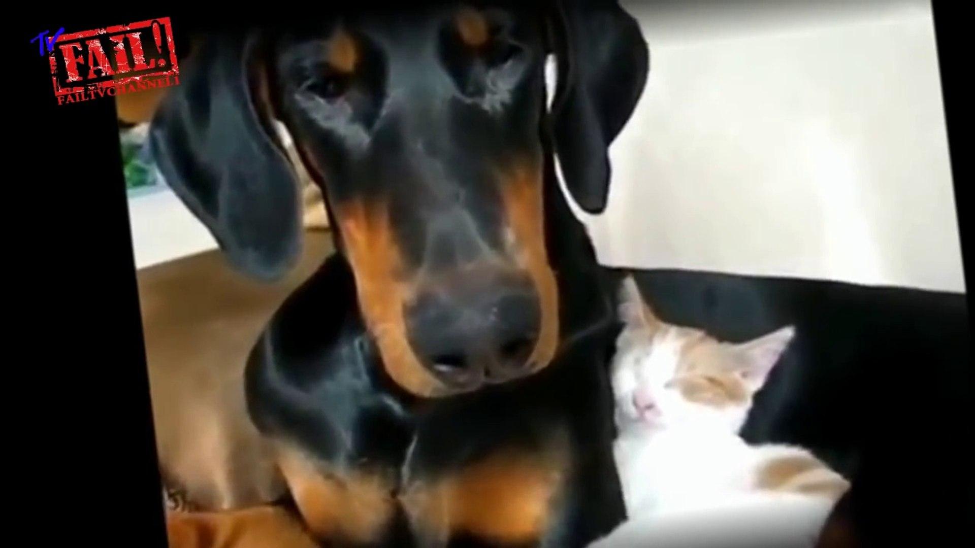 Кошки и собаки лучшие друзья. Только лучшее