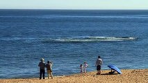 Avistamiento de ballenas en Punta del Este