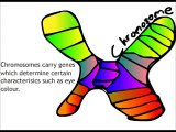 Genes, chromosomes and DNA in a minute