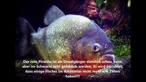 Die 10 gefährlichsten Fische der Welt / The top 10 of the dangerous fish in the world