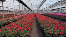 Plant Growth Regulators #637 (From Ag PhD #637 6/20/10)
