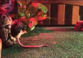 Snake Strikes Mouse in Slow Motion
