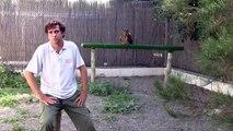 Centro de Recuperación de Fauna Silvestre. Alicante