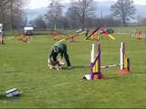 Pembroke Welsh Corgis competing in Agility in Wales