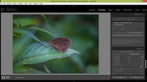 Lightroom 5 Tutorial Photo Editing Butterfly Photography